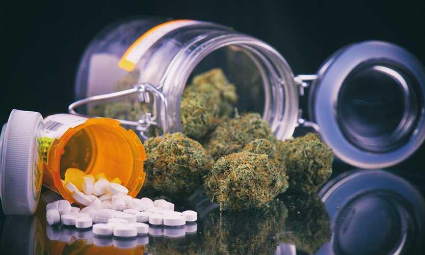 Golden Bear to offer marijuana coverage in California - Business Insurance